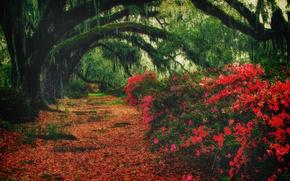 деревья, листва, цветы, кусты