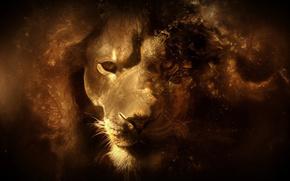 лев, большая кошка, царь зверей