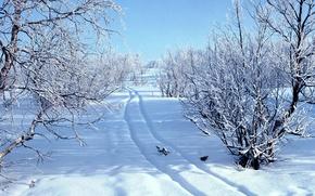 invierno, nieve, bosque