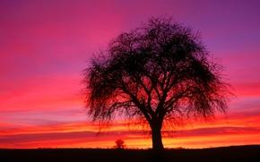 утро, восход, рассвет, дерево, небо