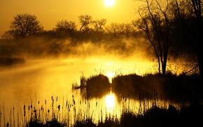 утро, озеро, вода, лес, туман, рассвет