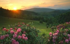утро, солнце, горы, дерево, цветы, рассвет