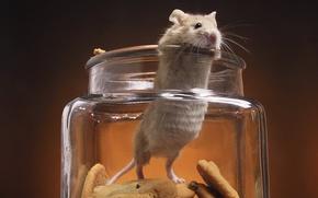 mouse, biscotti, banca