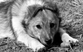 собака, печаль, друг