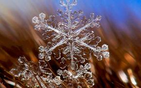 snowflake, winter