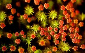 fiori, Macro