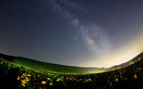 natura, Gwiazda, kwiaty, Masahiro miyasaka