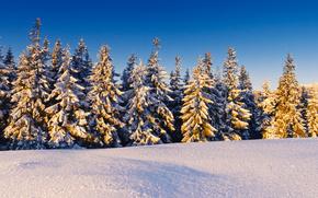 comi, Los rboles, nieve, cielo, sol, bosque, derivas
