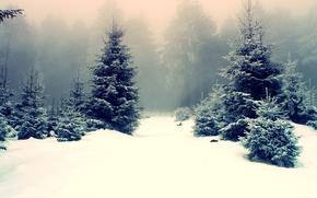 Naturaleza, invierno, bosque, derivas, Los rboles