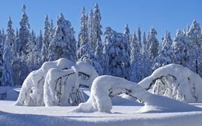 nieve, derivas, Los rboles, Los rboles, comi, confero