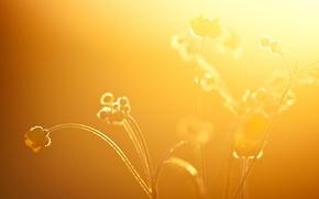 Plants, glow, joni niemela
