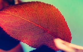 leaves, macro