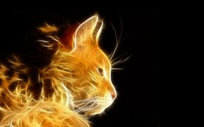 gatto, luce, raggi, Photoshop