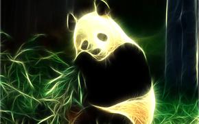 panda, luce, raggi, Photoshop