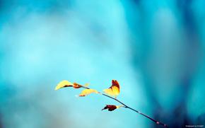 макросъемка, ветка, голубой фон