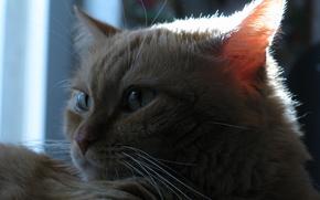 gatto, vista