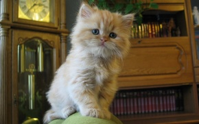 小猫, 看
