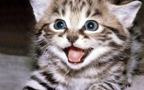 котёнок, cat, прелесть