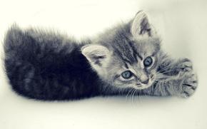 cat, Beautiful