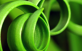 erba, verde, Macro