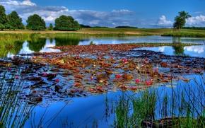 池塘, 睡莲