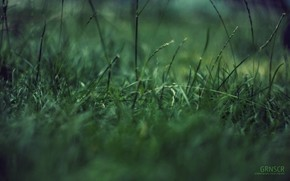 Macro, grass, green garbage, concentration