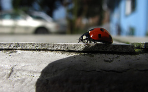 beetle, road