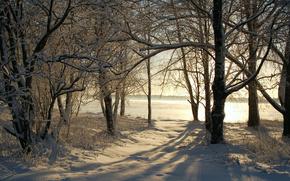 природа, зима, зимние обои, фото, снег, деревья