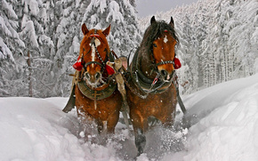 winter, Horse, snow