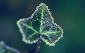 lista, verde