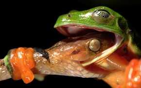 macro, frog, snake