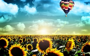 Life, sunrise, landscape, flight, balloon, Sunflowers, field, dawn