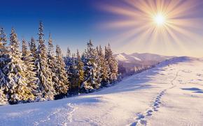 foresta, inverno, neve, tracce, Montagne, cielo, sole