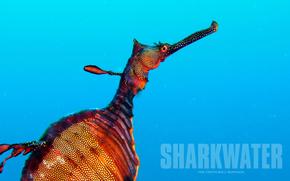 Rekin, Sharkwater, film, film