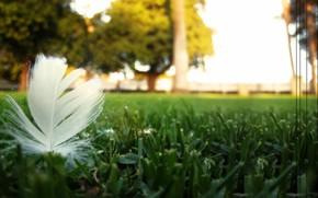природа, перо, газон, пыльца, передний план