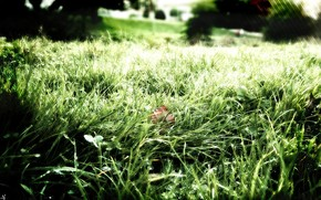 зелень, трава, роса, природа, свежесть