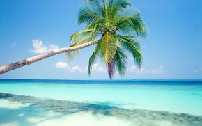 palm, Sea, vacation, tropics