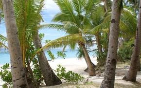 пальмы, стволы, море, тропики