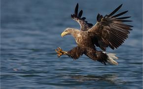 acqua, uccello, volo, ali, corsa