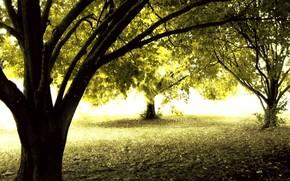лес, осень, солнце, деревья