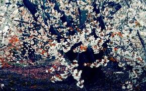 natura, albero, fiori