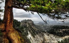 Coni, albero, fiume, Montagne