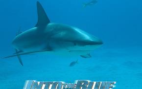 Benvenuti in paradiso!, Into the Blue, film, film