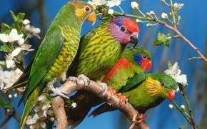 Parrots, tree