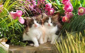 котята, кошки, животные, цветы, тюльпаны, зелень, малыши