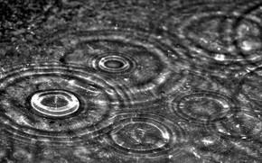 капли, дождь, макро