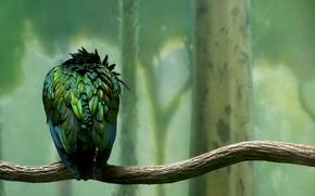 ramo, uccello, piumaggio, verde