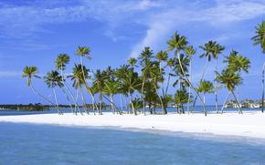 tropics, Palms, sand, island