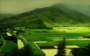 природа, холмы, зелень