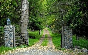 森林, 门, 道路